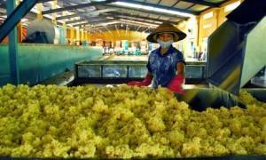 Xuất khẩu cao su 5 tháng tăng 61,5% về giá trị